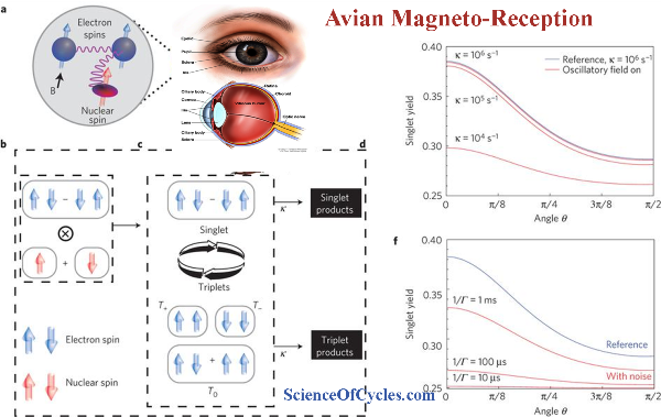 avian_magnetoreception1_m