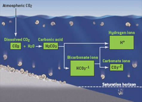 bicarbonate-ions