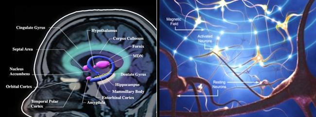 brain_magnetics1_m