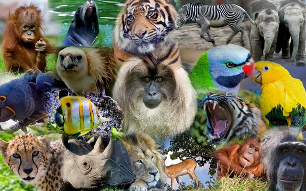 collage_animals